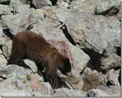 June 9 1 bear