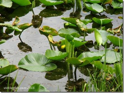 June 10 5 Swan Lake 2