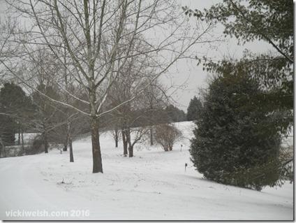 Feb 15 snow