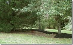 Apr 20 trees