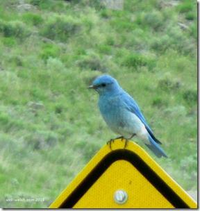 June 6 10 bluebird