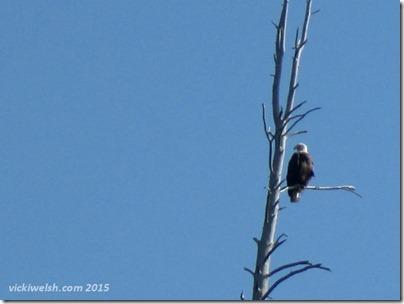 June 10 3 eagle