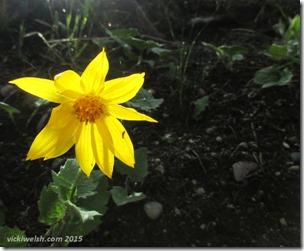 June 7 6 flower