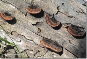 June 7 10 lichen