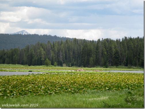 June 10 5 Swan Lake 1